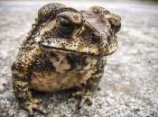 Правда ли то, что бородавки появляются от лягушек