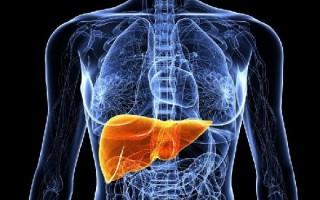 Липома в печени: симптоматика и лечение заболевания