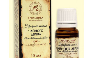 Польза чайного дерева при лечении бородавок и папиллом