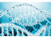Особенности ДНК онкогенных и неонкогенных штаммов ВПЧ