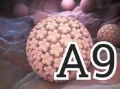 ВПЧ группы А9: причины, симптомы и комплексное лечение