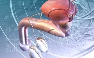 Абсцесс, возникший на простате: причины и опасность заболевания