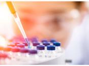 Анализ на вирус папилломы человека: виды, особенности процедуры и сдачи