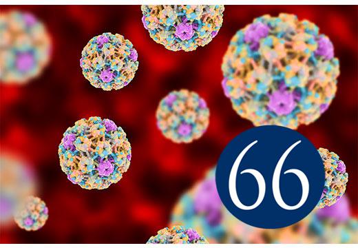 ВПЧ 66 штамма