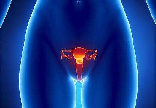 Репродуктивные органы женщины